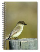 Eastern Phoebe At Falcon State Park Of Texas Spiral Notebook