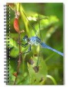 Eastern Pondhawk Dragonfly Spiral Notebook