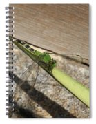 Eastern Pondhawk On A Leaf Spiral Notebook