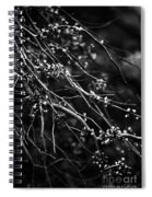 Eastern Redbud In Black And White Spiral Notebook