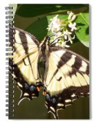 Eastern Tiger Swallowtail  Butterfly Wingspan Spiral Notebook