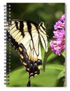 Eastern Triger Swallowtail Spiral Notebook