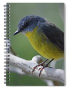 Eastern Yellow Robin Spiral Notebook