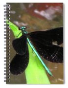 Ebony Jewel Damselfly Spiral Notebook