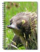 Echidna Spiral Notebook
