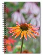 Echinacea Purpurea Orange Passion Flower Spiral Notebook