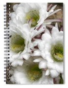 Echinopsis Blossoms  Spiral Notebook