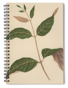 Echites Nutans Spiral Notebook