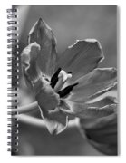 Echoes Of Past Glory Spiral Notebook