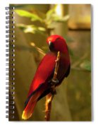 Eclectus Parrot Digital Oil Painting Spiral Notebook