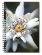 Edelweiss Spiral Notebook