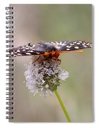 Edith's Checkerspot Four Spiral Notebook