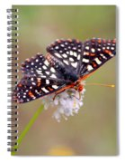 Edith's Checkerspot Three Spiral Notebook