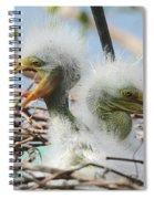 Egret Chicks In Nest With Egg Spiral Notebook