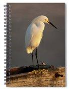 Egret Glow Spiral Notebook