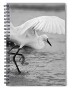 Egret Hunting In Black And White Spiral Notebook