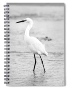 Egret In Black And White Spiral Notebook