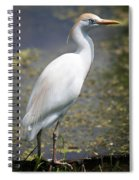 Egret Or Crane Spiral Notebook
