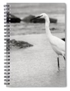 Egret Patrolling In Black And White Spiral Notebook