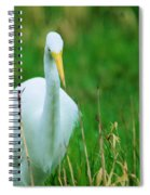 Egret Stare Down Spiral Notebook