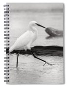 Egret Step In Black And White Spiral Notebook
