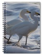 Egrets In The Shallows Spiral Notebook