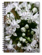 Egyptian Onion Spiral Notebook