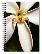 Eight Legged Goalie Spiral Notebook