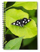 Eight Spotted Forester Spiral Notebook