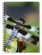 Eight-spotted Skimmer  Spiral Notebook