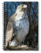 Elder Hawk Spiral Notebook