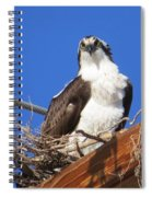 Electric Blue Osprey Spiral Notebook