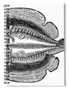 Electric Ray Spiral Notebook