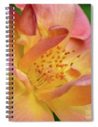 Elegant Joseph's Coat Of Many Colors Rose Spiral Notebook