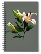 Elegant Lily And Buds Spiral Notebook