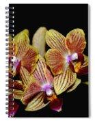 Elegant Orchid On Black Spiral Notebook