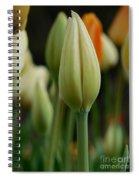Elegant Tulip Spiral Notebook