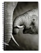 Elephant Affection Spiral Notebook