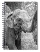 Elephant And Tree Trunk Black And White Spiral Notebook