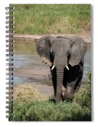 Elephant At The River Spiral Notebook
