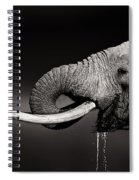 Elephant Bull Drinking Water - Duetone Spiral Notebook