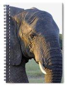 Elephant Close Up Spiral Notebook