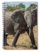 Elephant Crossing Dirt Track Facing Towards Camera Spiral Notebook