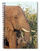 Elephant - Curled Trunk Spiral Notebook