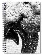 Elephant Gossip Spiral Notebook