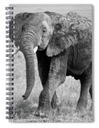 Elephant Happy And Free In Black And White Spiral Notebook