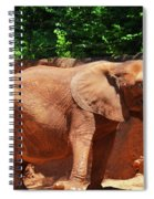 Elephant In Red Clay Spiral Notebook
