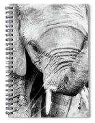 Elephant Portrait In Black And White Spiral Notebook