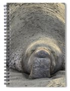 Elephant Seal 3 Spiral Notebook
