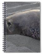 Elephant Seal 5 Spiral Notebook